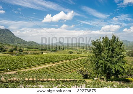 Hua Hin Hills vineyards outside Hua Hin in Thailand. The quality of wines is improving in Thailand and the best wines are made from chenin blanc, colombard and shiraz.