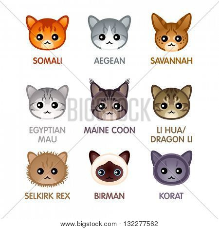 Cute cat breed head icons, set IV