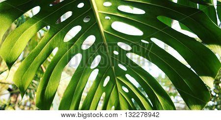 Sunlight Falls Through Palm Leaf. Toned Photo.
