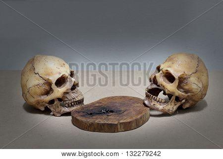 Human Skull On Old Wood Background ; Still-life