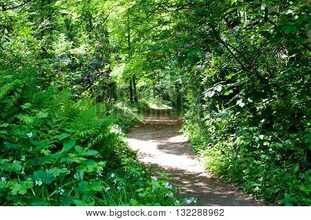 Walking footpath in Rhododendron Gardens in Deer park Dublin Irelnad