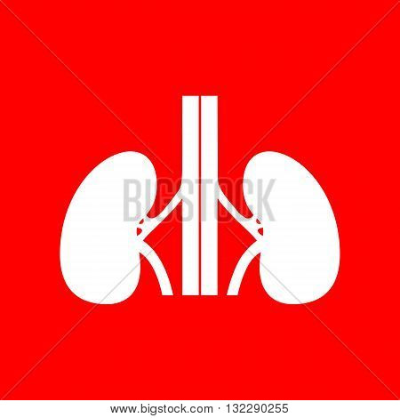 Human kidneys sign. White icon on red background.