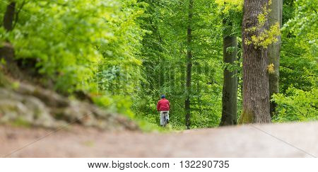 Male Cyclist Riding the Bike on the Beautiful Spring Forest Trail. Rear view. Man Cycling in Nature.