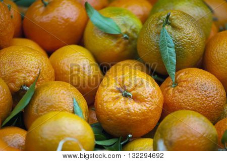 Fresh citrus fruits mandarines clementines tangerines on a market