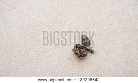 House lizard body gecko dead bone on floor