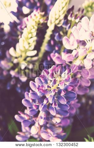 Beautiful violet and purle wild flowers macro shot