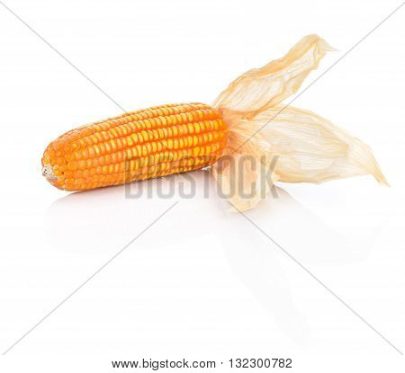 Corncob with dry leaves on white background