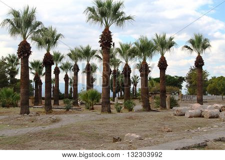 Date palms. Sand and sky. The tropical nature.