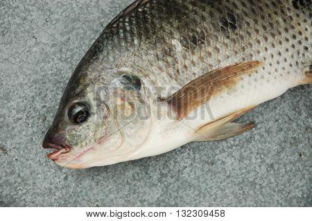 Fresh raw fish, Close-up of Fresh Raw Fish