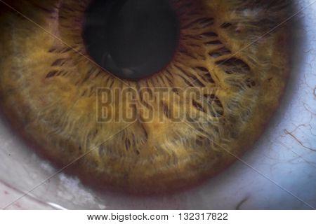 Macro extreme close up human eyeball background
