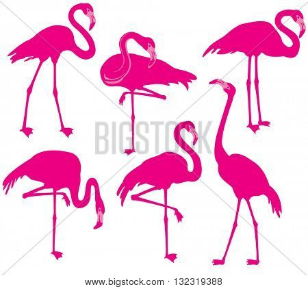 Set of vector silhouette of flamingos