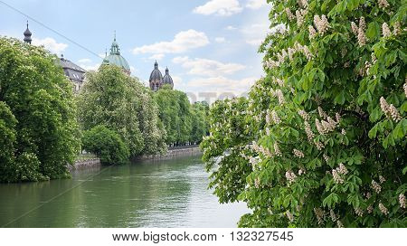 Waterfront Of Isar River Munich, With Blooming Chestnut Trees
