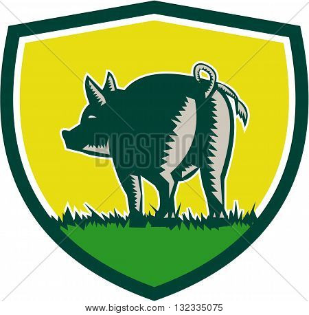Illustration of a pig standing showing pigtail viewed from rear set inside shield crest done in retro woodcut style.