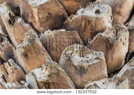 Closeup surface of trunk of palm tree background