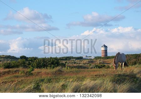 Overview of a Dune Landscape with a Water Tower and a grazing Inlet Horse