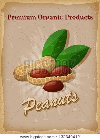 Peanuts vintage poster. Vector illustration. EPS 10