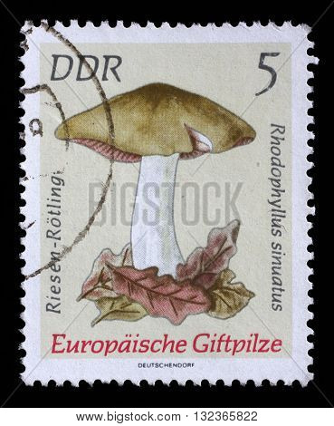 ZAGREB, CROATIA - SEPTEMBER 05: A Stamp printed in GDR shows image of the Entoloma sinuatum, from the series Poisonous European Mushrooms, circa 1974, on September 05, 2014, Zagreb, Croatia