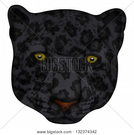 This is a Panther face Illustration with clipping path