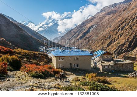 High altitude village of Yak Kharka. Annapurna circuit trek in Nepal.