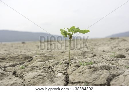 One of the young trees occur in the dry The dam without water