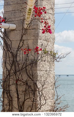 Plant With Thorns And Flowers On Stone Pillar