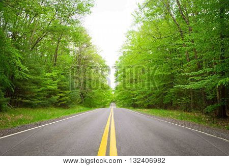 Straight mountain road in green forest. Photographed in upstate, New York.