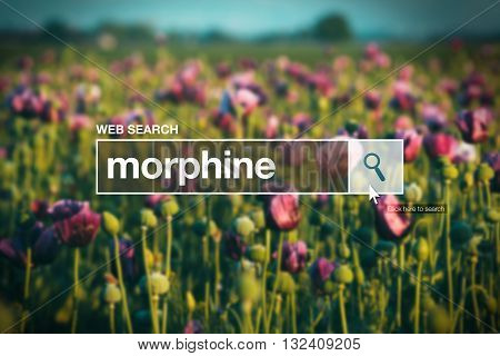 Morphine in internet browser search box opium poppy field in background
