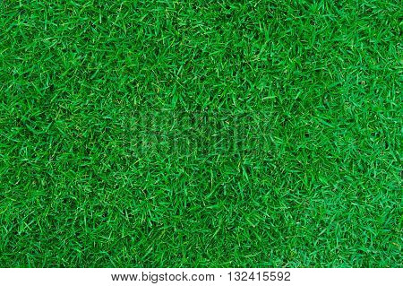 Green grass for use as background or backdrop beautifully.