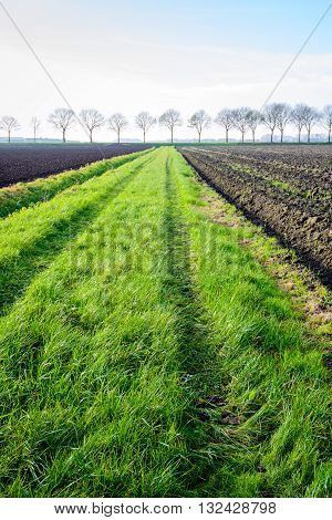 Backlit image of the tire tracks in the grass strip between two plowed fields and in the background a row of bare trees on a sunny day in the fall season.