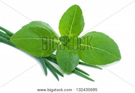 Fresh basil and chive isolated on white background