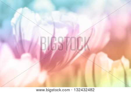 Abstract tulip on concept blurred and soft tone color ,This image, process is blurred. To spread soft feel about love, dreams are appropriate to place a background image for related content