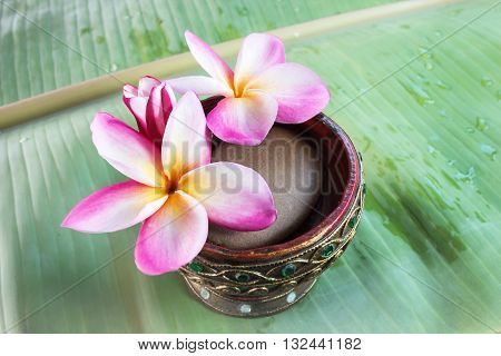 Beutiful Pink White And Yellow Flowers Plumeria Or Frangipani On Green Banana Leaf, Fresh Sweet Flow