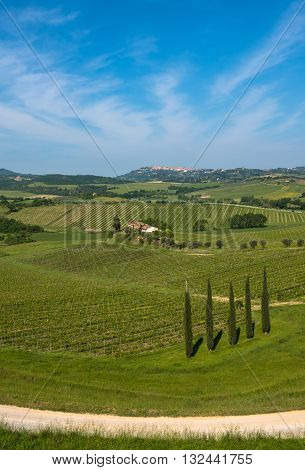Highly detailed image of typical tuscan landscape