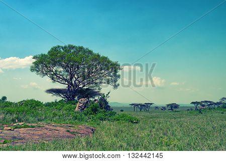 Scenic savanna landscape with acacia tree and beautiful sky