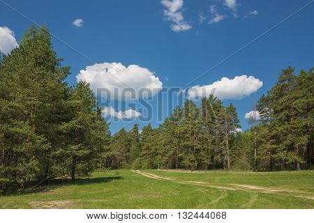 Beautiful landscape: dirt road is on a large green meadow in the middle of a pine forest under blue sky with white clouds