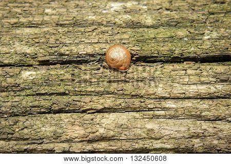 snail sleeping on an old tree trunk