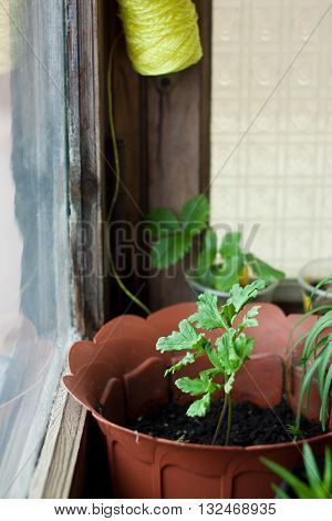 Cosy balcony garden - flowers in front of the window