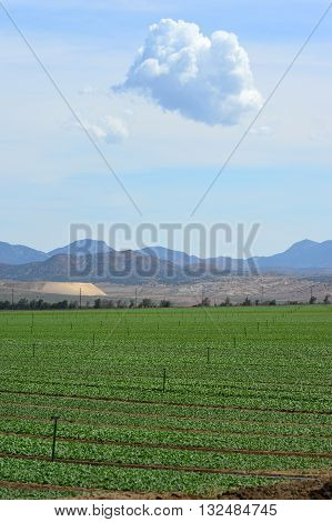 Irrigated green fields where crops are grown in a valley in the Tehachapi Mountains, part of the Sierra Nevada Range, California.