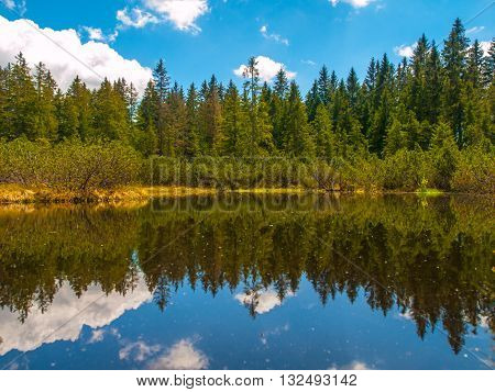Forest and blue sky reflection in the water, Three Lake Moor, Sumava National Park, Czech Republic