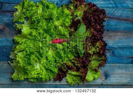 Fresh Salad Leaves And Radish