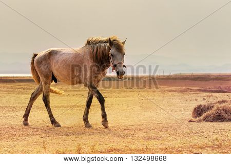 portrait full body of beautiful white male horse with perfect rim light against wide meadow landscape