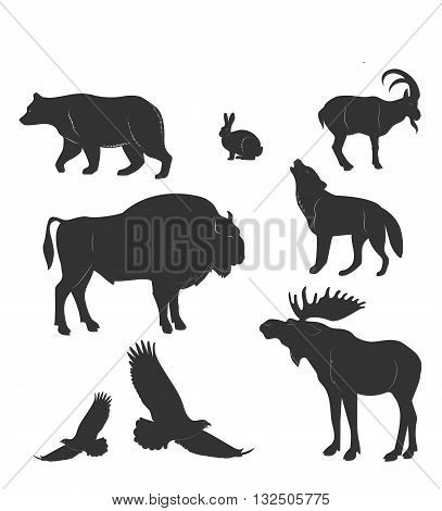 Set Of Animals,wild Beasts, Vactor
