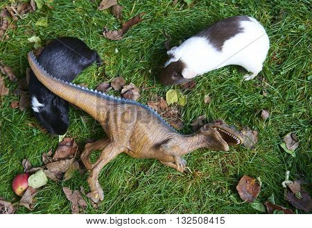 Toy dinosaur monster raptor fighting with new guinea pig on the green grass lawn