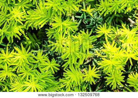 Closeup surface fresh green leaves texture background