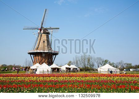 HOLLAND, MICHIGAN-MAY 07, 2015: An authentic wooden windmill from the Netherlands rises behind a field of tulips in Holland Michigan at Springtime.