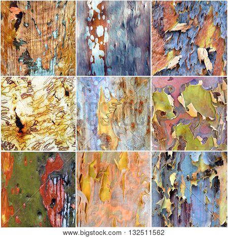 Collage of amazing colorful Australian gumtree bark
