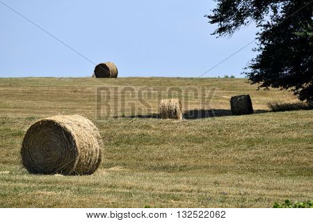 Bales of hay landscape background rural Georgia, USA