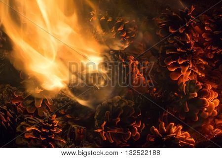 burning pine cones bright coals with flame a spectacular fiery background