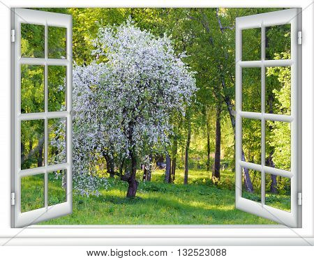 View Window Flowering Tree