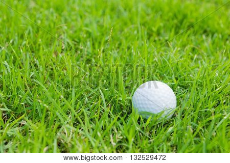 a golf ball in the green rough